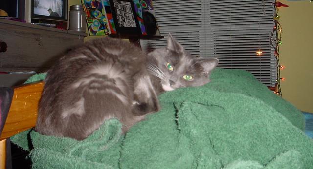 kittylight2.jpg