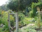 Highlight for Album: My New Garden 2006