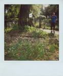 tea_garden_060813.jpg
