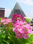 Highlight for Album: A Bloom-rific Garden!