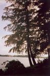 lake_color_8.jpg