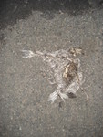 Highlight for Album: Decomposed Pigeon Under our Dumpster